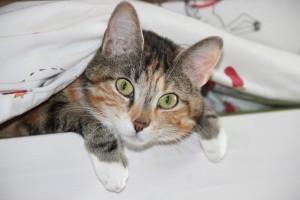 cat-278191_1280