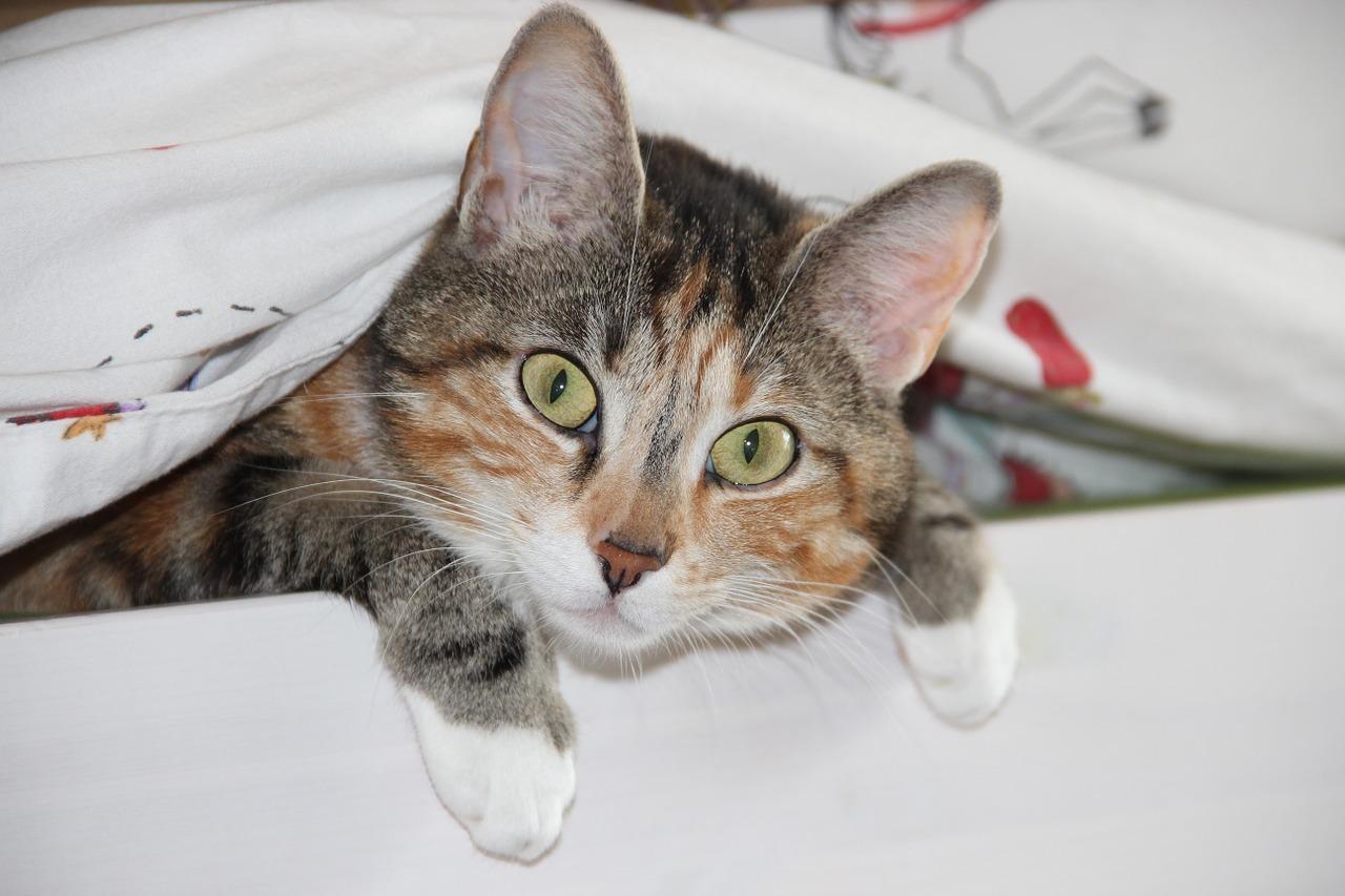 Чумка у кошек 16 фотография